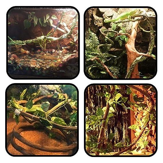 PietyPet 25 Piezas Reptiles Lagartija Decoración del hábitat, 2 ...