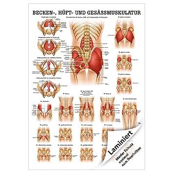 Gesäss, Hüfte u. Beckenmuskulatur Mini-Poster Anatomie 34x24 cm med ...