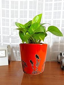 Rolling Nature Good Luck Money Plant in Orange Bucket Aroez Ceramic Pot