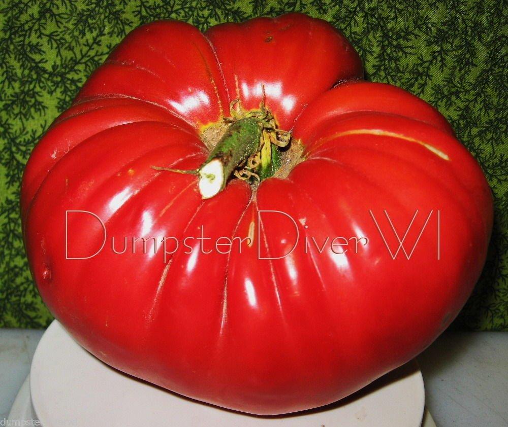 Organic Italian Beefsteak Tomato Seed