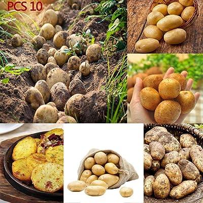 GoodKE 20pcs/ Bag Sweet Potato Seeds Home Garden Vegetable Plants Vegetables : Garden & Outdoor