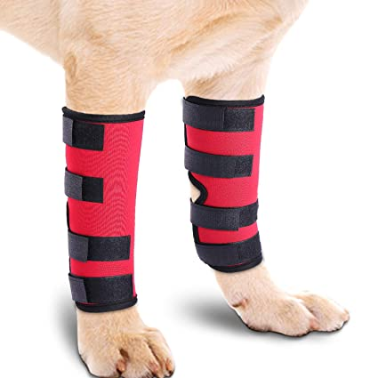 2a81e9784e MIGOHI Dog Knee Brace for Torn ACL/CCL Hind Back Leg Dog Canine Protector  Rear