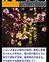 ライトノベル小説で学ぶ日本史B 中世(鎌倉時代初期)編【大学入試・センター試験対応】 ライトノベル小説で学ぶ歴史