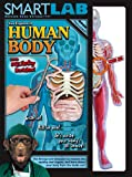 Smart Lab You Explore It: Human Body Model