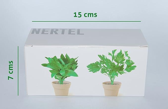Kit de 2 mini macetas biodegradables de Perejil y Menta para ...