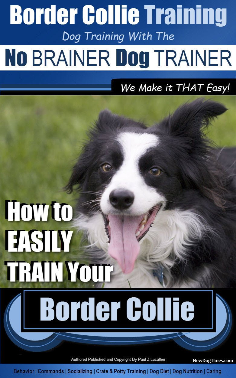 Border Collie Training Dog Training with the No BRAINER Dog TRAINER ~ We Make it THAT Easy!: How to EASILY TRAIN Your Border Collie (English Edition)
