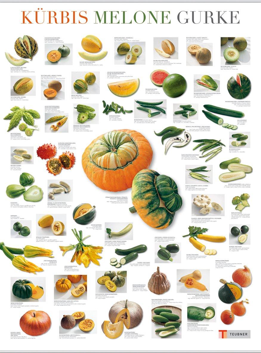 Kürbis, Gurke und Melone (Teubner Poster)