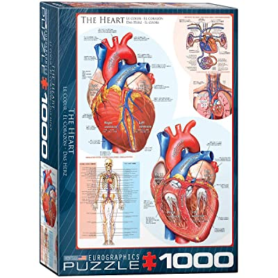 EuroGraphics Human Body (The Heart) Puzzle (1000-Piece): Toys & Games