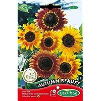 Germisem Autumn Beauty Semillas de Girasol 3 g (EC1531)