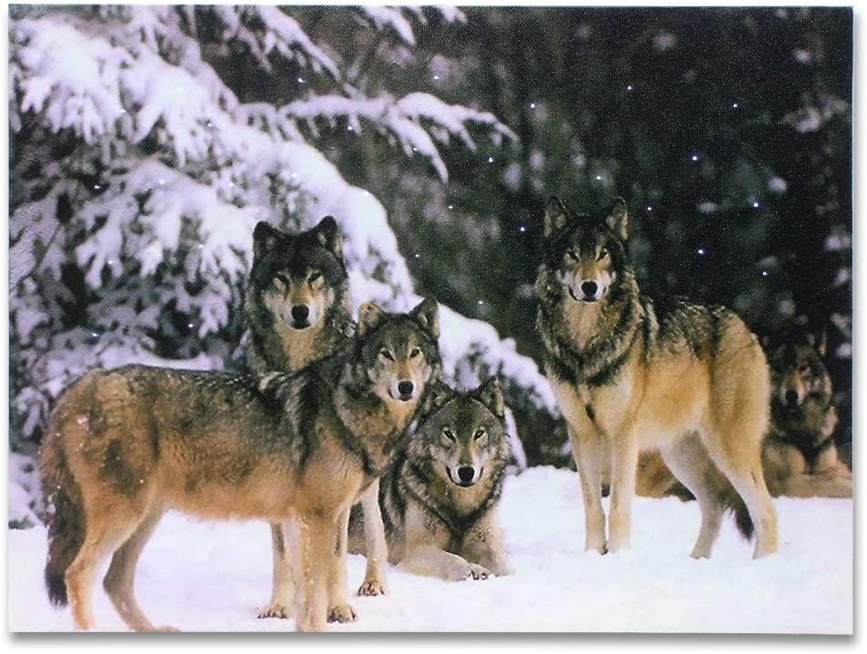 BANBERRY DESIGNS Wolf Pack LED Lighted Canvas Print Home Decor - Pack of Grey Wolves in a Snowy Winter Forest Scene - 16x12 Inch