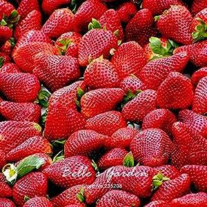 100 piezas 9 variedades de fresa elección Semillas Semillas en maceta de fresa Bonsai Balcón Patio Jardín Planta DIY Rojo