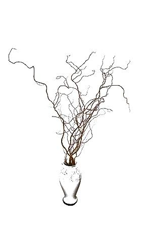 6 Frische Korkenzieherweide Zweige Orange Ca 100 Cm Lang Echte