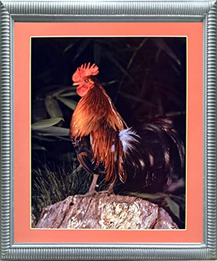 20x24 Bantam Rooster Chicken Animal Picture Silver Framed Wall Decor Art Print