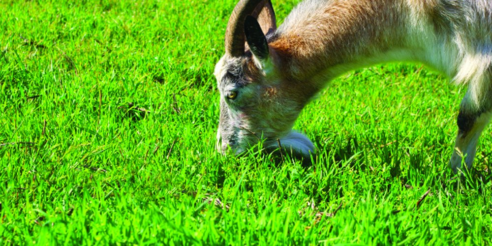 Nature's Seed 1 Acre Southwest Semi-Arid Steppe Goat Pasture Blend