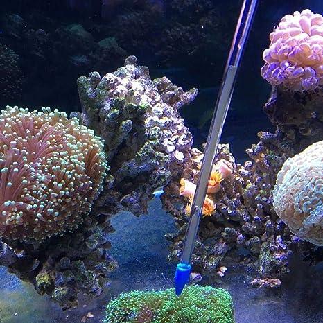 Uteruik - Comedero de Coral con Tubo de acrílico Marino para Alimentar líquidos, arrecifes Marinos, Plantas acuáticas, Plantas de Cultivo, Pinzas, ...