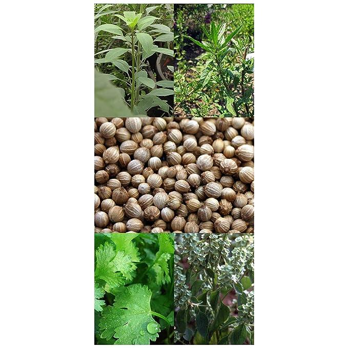 Hierbas Mexicanas set de semillas regalo con 4 hierbas culinarias ...
