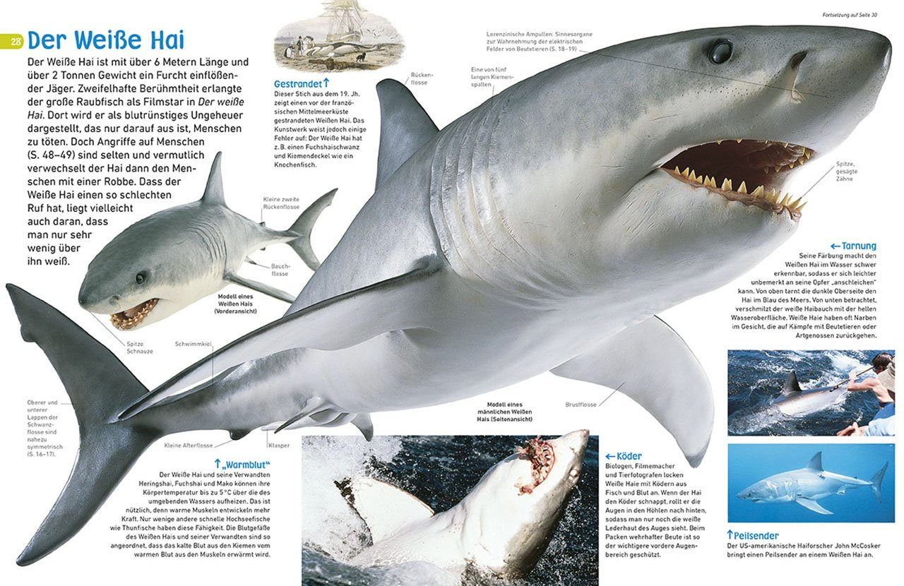 Wunderbar Anatomie Eines Hai Biss Fotos - Menschliche Anatomie ...