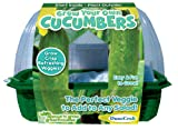 DuneCraft Grow Your Own Cucumbers Sprout and Grow
