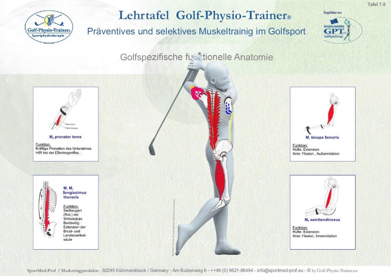 Golf-Physio-Trainer Lehrtafel Set: Amazon.de: Bürobedarf & Schreibwaren