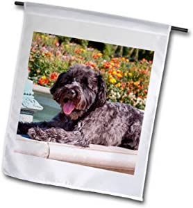 3dRose Schnauzer Lying on Fountain Edge in Rose Garden, Mr. and Mrs, Garden Flag, 12 by 18