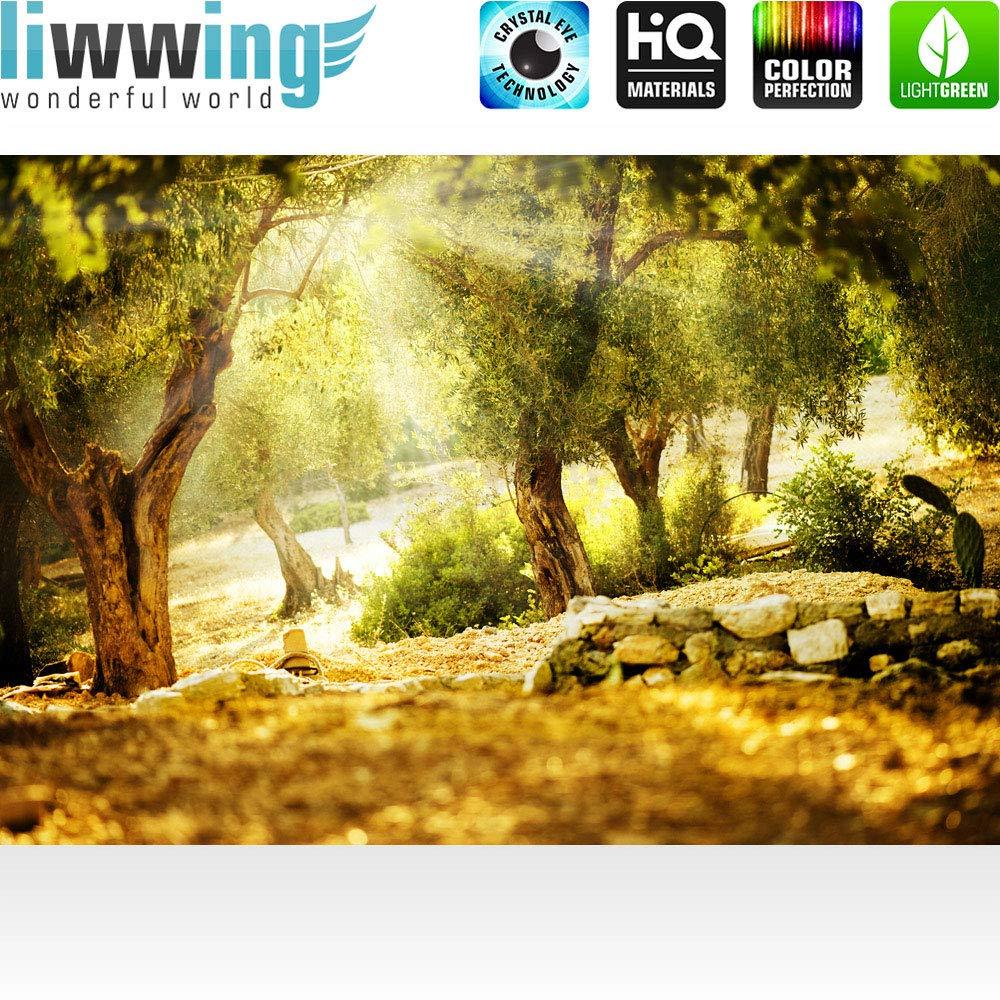 Vlies Fototapete Fototapete Fototapete 400x280 cm PREMIUM PLUS Wand Foto Tapete Wand Bild Vliestapete - Wald Sonne Steine Bäume Natur - no. 0265 B00Z4N886G Leinwanddrucke 54630a