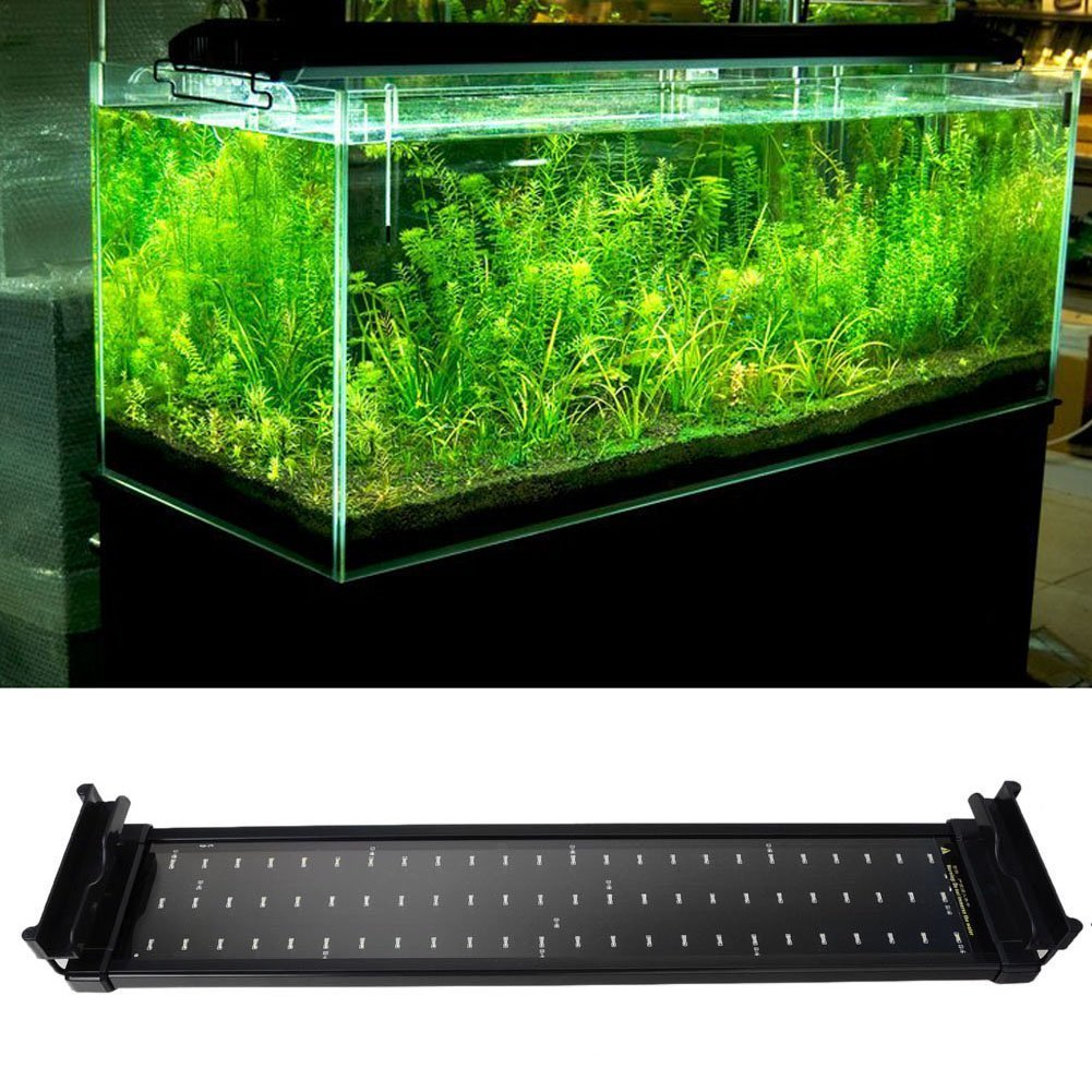 Freshwater aquarium fish less than 2 inches - Amazon Com Mingdak Led Aquarium Light Fixture For Fish Tanks Suitable For Saltwater And Freshwater 72 Leds 20 Inch Lighting Color White And Blue