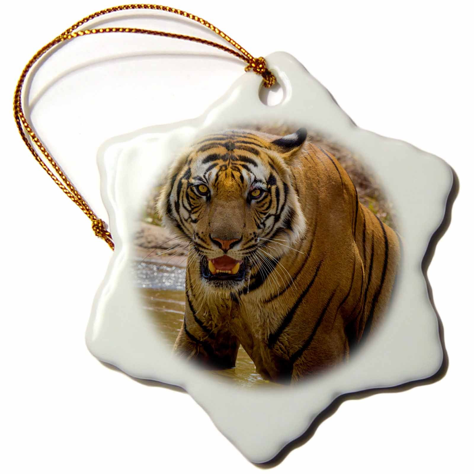 3dRose Danita Delimont - Big Cats - India, Bandhavgarh Tiger Reserve. Fierce gaze of a Bengal tiger. - 3 inch Snowflake Porcelain Ornament (orn_276807_1)