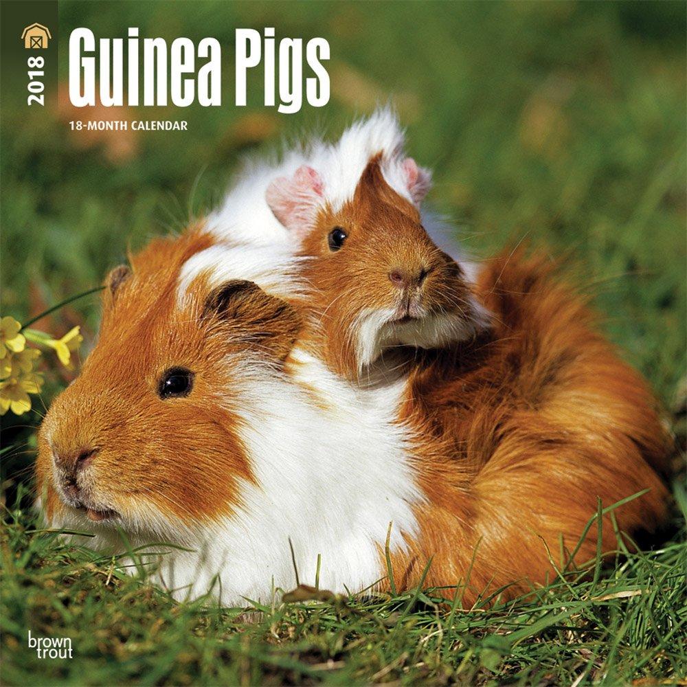 Guinea Pigs - Meerschweinchen 2018-18-Monatskalender: Original BrownTrout-Kalender [Mehrsprachig] [Kalender] (Wall-Kalender)