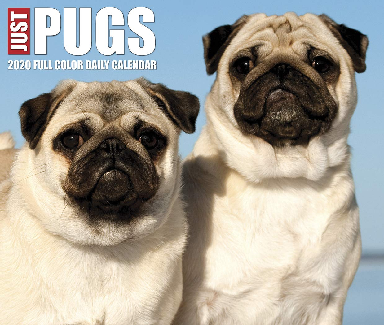Just Pugs 2020 Box Calendar  Dog Breed Calendar