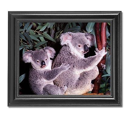 Koala Bear w// Joey Hangs in Eucalyptus Tree Photo Wall Picture 8x10 Art Print