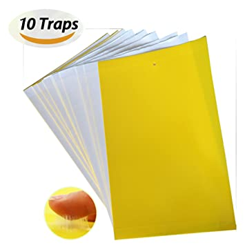 JTHM High Effect Dual-sided Yellow Sticky Fly Traps Whitefly for Leaf Miner Aphids Fungus Gnats Mosquitoes u0026 Other Flying Insects ( 10pcs) ...  sc 1 st  Amazon UK & JTHM High Effect Dual-sided Yellow Sticky Fly Traps Whitefly for ...