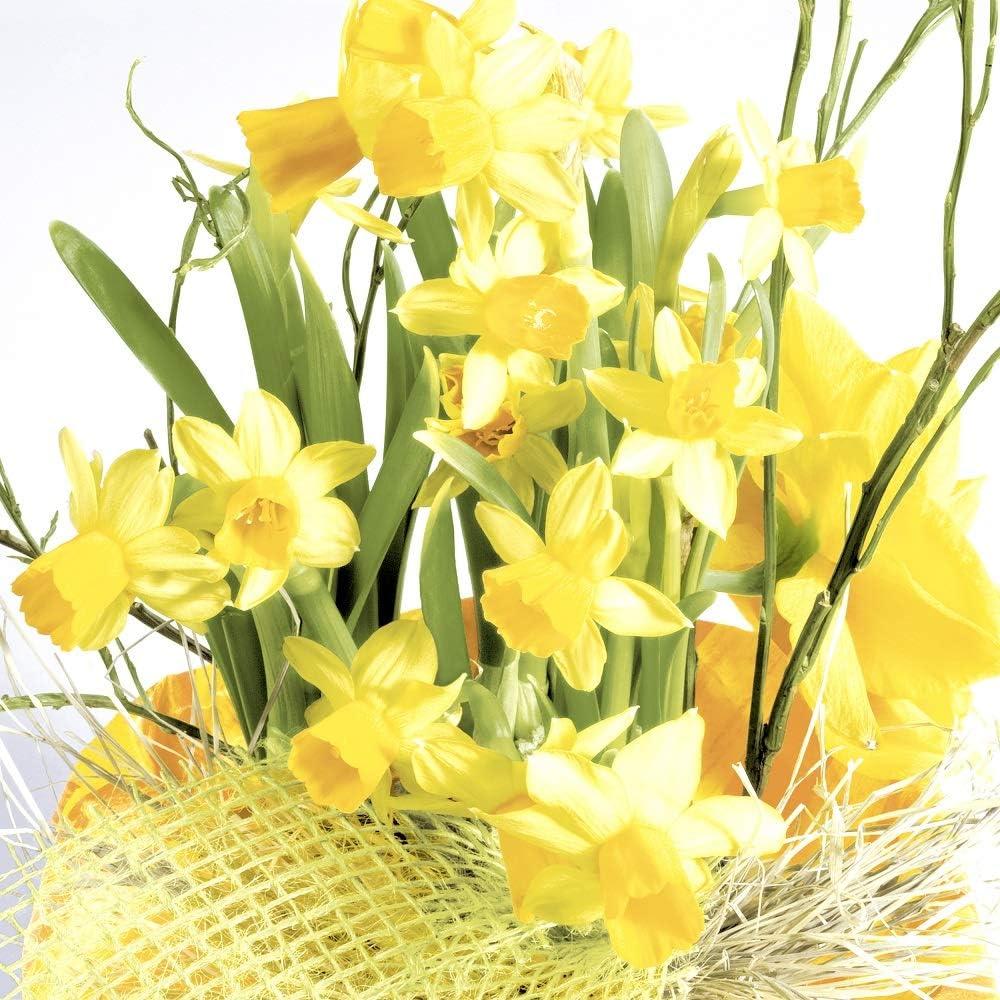 "Easter Party Napkins Cocktail Napkins Paper Napkins Disposable Beverage Spring Decor Daffodil Floral Napkins 5"" x 5"" Pk 40"