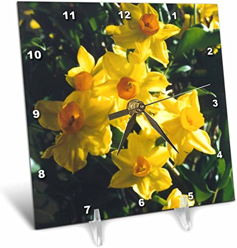 3dRose LLC Daffodils Desk Clock, 6 by 6-Inch