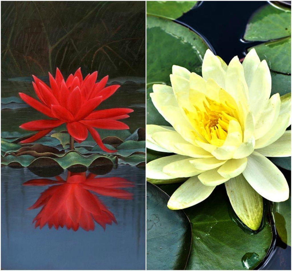 BEE Garden Organic Lotus Mix Flower Seeds (Pack Of 10 Seeds) - Red ...