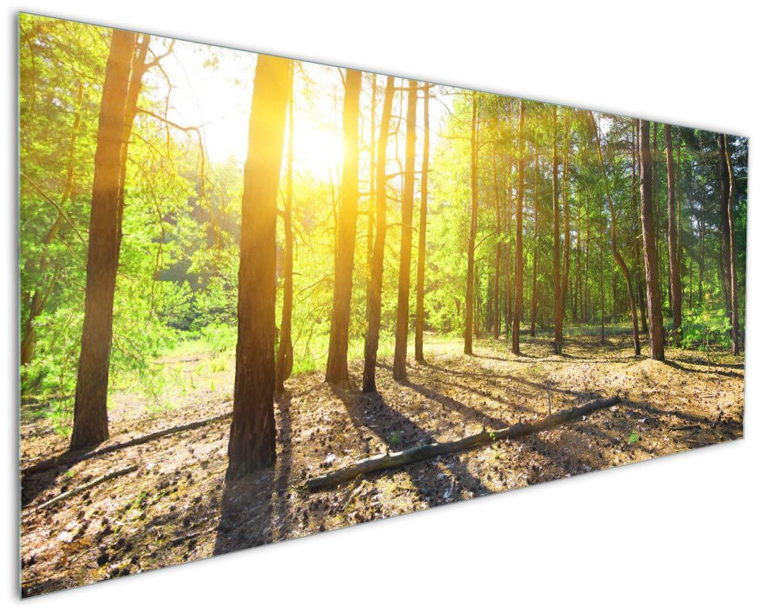 Wallario Premium Glas//Acrylglas Sonnenstrahlen im Wald Lichtung 50 x 125 cm