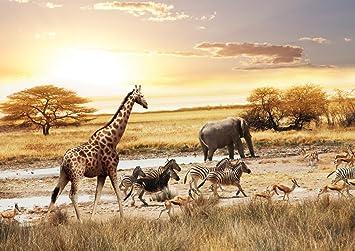 12 x 8.5 12/' x 8.5/' JP London Design JP London MDXL4169PS African Animals Safari Plain Removable Full Wall Mural