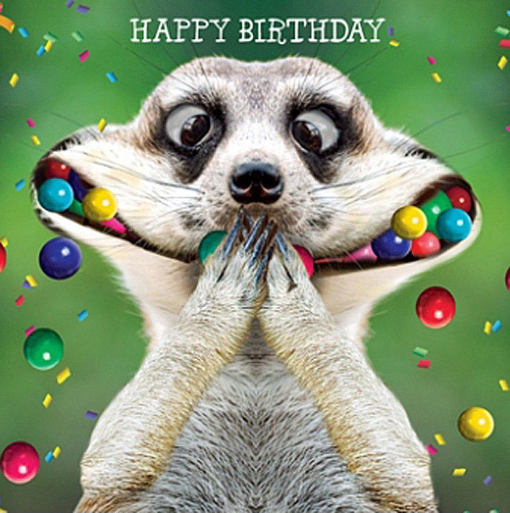 Meerkat Birthday Card Oooo I Say, Funny Greeting Card NEW