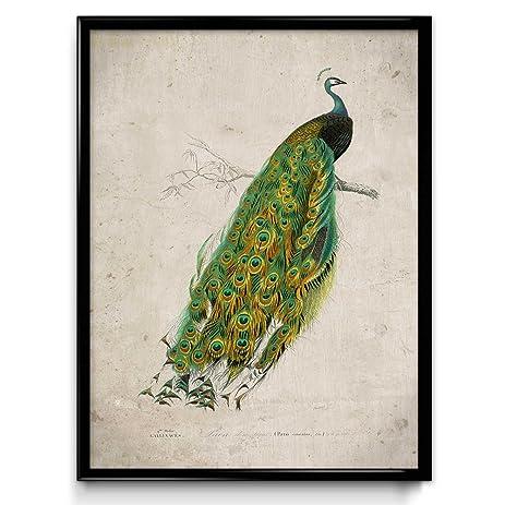 Amazon Peacock Vintage Print