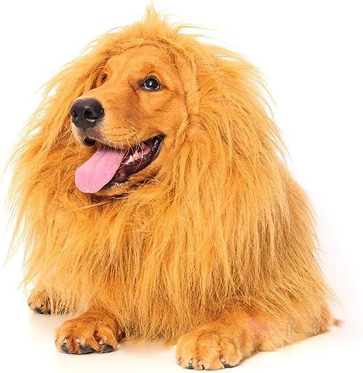 Dogloveit León Melena para Perro, Disfraz de Perro con Regalo [León Cola] León Peluca para Perro: Amazon.es: Productos para mascotas