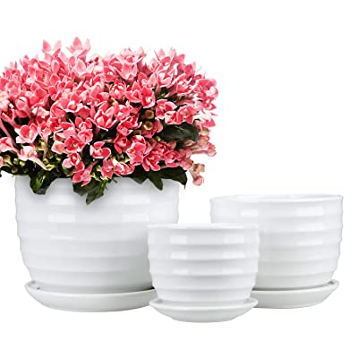 Encheng Round Modern Ceramic Garden Flower Pots Small to Medium Sized,White Planter Pots with Drainage,Succulent Planter Pots with Saucers 3 Pack: Garden & Outdoor