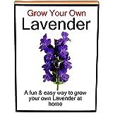 Indoor Kitchen Windowsill Garden - Grow Your Own Lavender Growing/Planting Kit