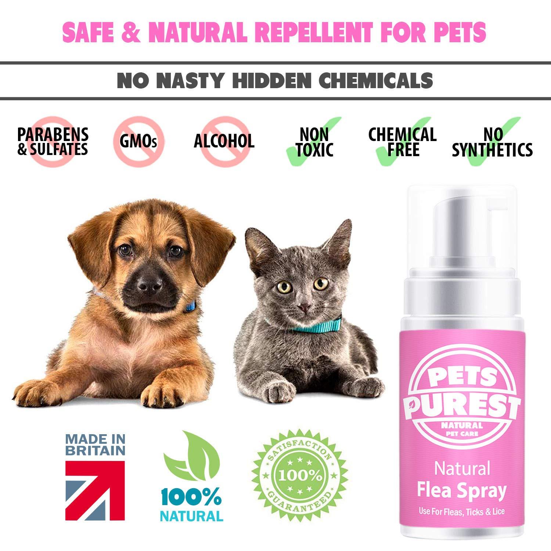 Pets Purest Tratamiento de pulgas 100% Naturales para Perros, Gatos y Mascotas | Mata y previene pulgas, garrapatas y piojos Ayude a Detener su picazón y ...