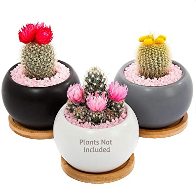 Mini Succulent Pots with Drainage & Bamboo Tray – Set of 3 Indoor Outdoor Small Planters for Cactus, Flowers, Herbs. Cute Home Office Decoration, House Deco (Rounded) : Garden & Outdoor