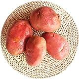 红皮土豆 (4500克装) 红皮黄心洋芋 云南特产 新鲜马铃薯