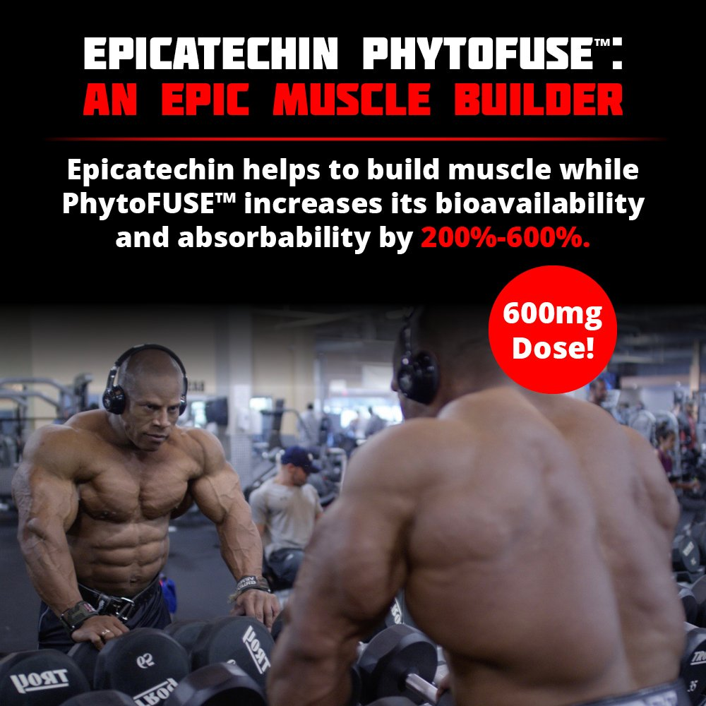 EP1LOGUE Muscle Builder & Epicatechin Supplement w/ Superior Absorption   Lean Muscle Building Formula w/ Nitric Oxide Stimulator VASO-6 & Urolithin B for Natural Body Building by Olympus Labs (Image #3)