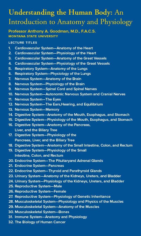 Contemporary Professor Fink Anatomy Mold - Image of internal organs ...