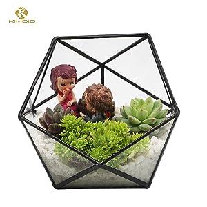 Kimdio Geometric Terrarium Clear Glass Tabletop Planter Air Plant Holder Display for Succulent Fern Moss Air Plants Holder Miniature Outdoor Fairy Garden DIY Gift (M-Black)