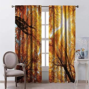 June Gissing Autumn Sunbeams Forest Bedroom Curtains Blackout Window Curtain Panel, Solid Pattern W63 x L72 Pair of Curtains in Darkened Room