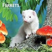 Ferrets 2019 Square Wall Calendar