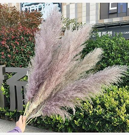Pampa de hierba natural beige y púrpura, natural y seco - desde la tendencia de la boda a dibujar los accesorios de fotografía de la tendencia interna decoración de la boda decoración del hogar